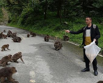 """""""张猴王""""守护82只猴子"""
