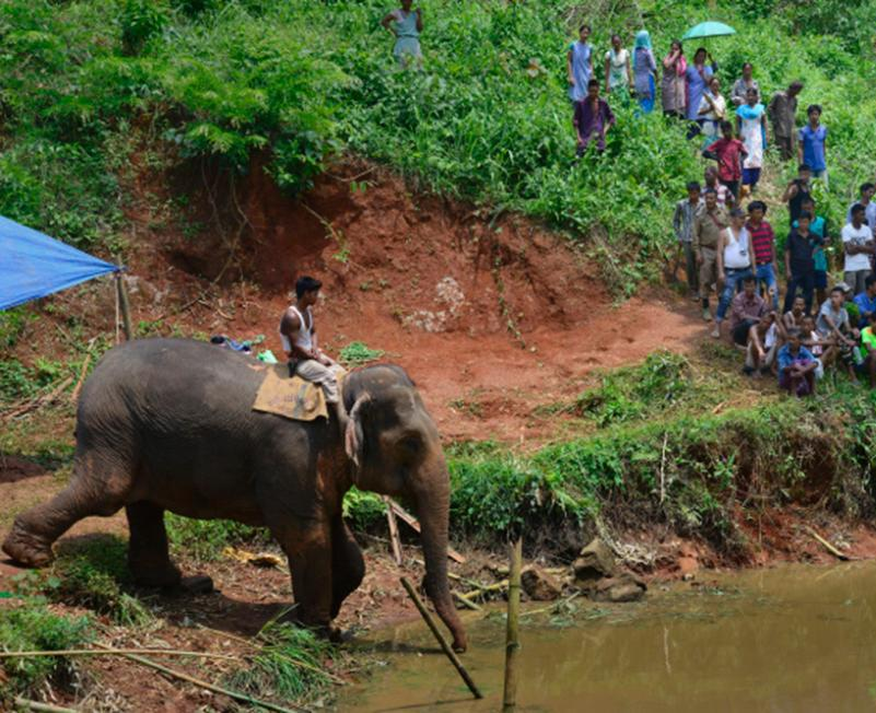 男子骑象营救被困小象