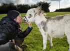 世界上最小的驴.png