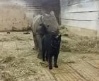 猫和犀牛成为朋友.jpg