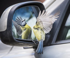 现实版愤怒的小鸟.jpg