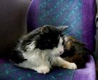 猫咪爱自己做公交.png