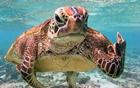 海龟调皮竖中指.jpg