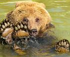 棕熊仰泳享受清凉.jpg