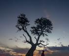 """肯尼亚""""生命之树"""".png"""