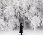 俄罗斯森林被冰封.jpg
