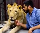 把狮子当宠物.jpg