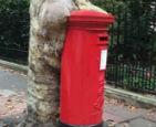 邮箱被树干吞没.jpg