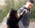 猫咪每天与主人告别.png