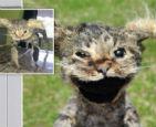 """""""科学怪猫""""标本.jpg"""