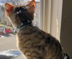 四只耳朵的猫.jpg