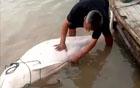 一靠岸他就杀海豚