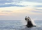 海豚鲸口脱险瞬间