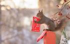 松鼠也忙着过圣诞