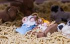 耶稣诞生场景还原