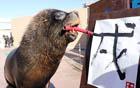 海狮嘴咬毛笔写字