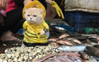"""小猫""""卖鱼""""照走红"""