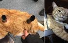 猫被三条金属刺穿.jpg