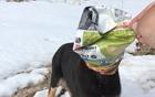 小狗头被薯片袋困