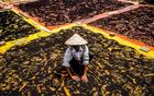 越南农民晒花椒