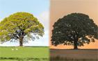 橡树的四季变幻.jpg