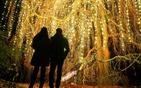 柏林圣诞灯光秀.jpg