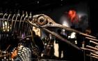1.8亿年前恐龙骨架.png
