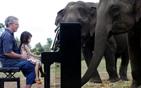 钢琴家为大象弹琴