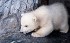 重生小北极熊表态.jpg