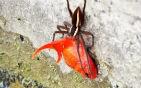金魚被蜘蛛捉走.jpg