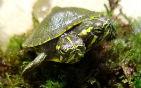 双头乌龟表情暴躁.jpg