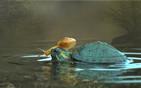 蜗牛坐乌龟头顶喝水.jpg
