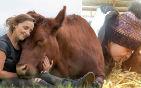 英国女孩养宠物牛.jpg