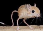 罕见的奇特动物照片