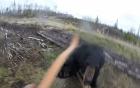 猎人拉弓瞄准时 黑熊扑了过来