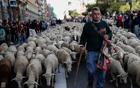牧羊穿越马德里.jpg