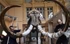 猛犸象骨骼拍卖.jpg