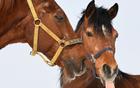 两匹马冷天做互动.jpg
