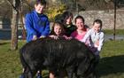 猪被收养成宠物猪.png