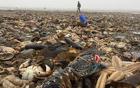 海洋生物占领海滩.jpg