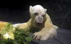 热带出生的北极熊.jpg