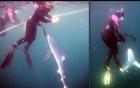 潜水员与蓝鲨同游.jpg