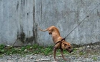 小狗靠两条腿行走.jpg