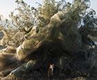 巨型蜘蛛网吞噬希腊海岸.jpg