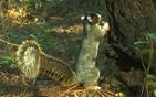 巨型松鼠高60厘米.jpg