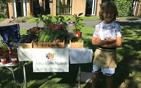8岁男孩自己种菜.jpg