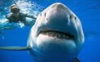 与鲨鱼亲密互动.jpg