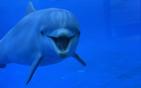 海豚宝宝咧嘴欢笑.jpg
