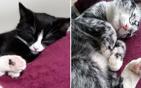 小猫患病由黑变白.jpg
