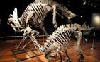 法国拍卖恐龙骨架.jpg